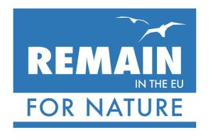 REMAIN_Screen Shot 2016-06-20 at 9.39.49 PM